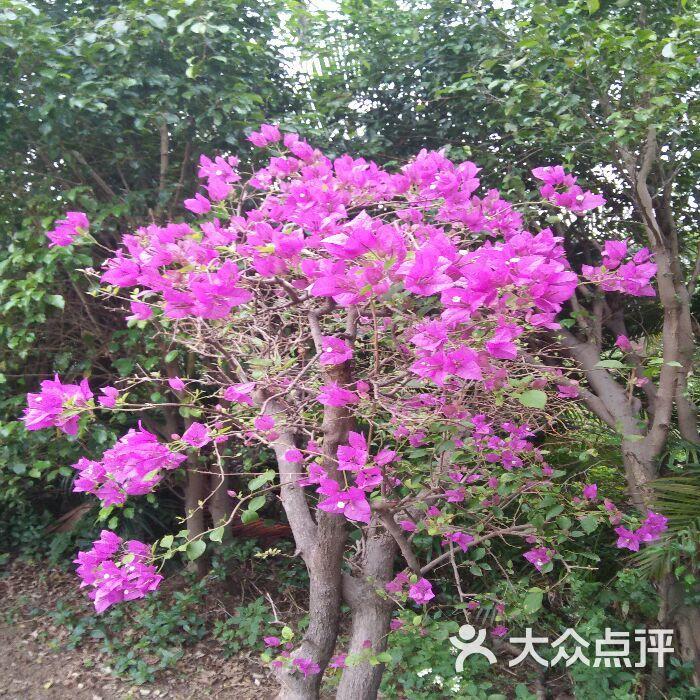 三岭山森林公园生态园(森林公园生态园)图片 - 第37张
