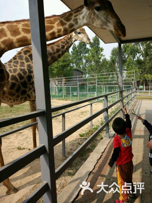 东莞寮步香市动物园图片 - 第139张
