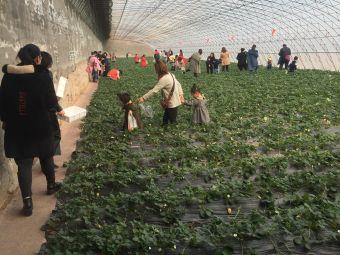 语彤草莓采摘园