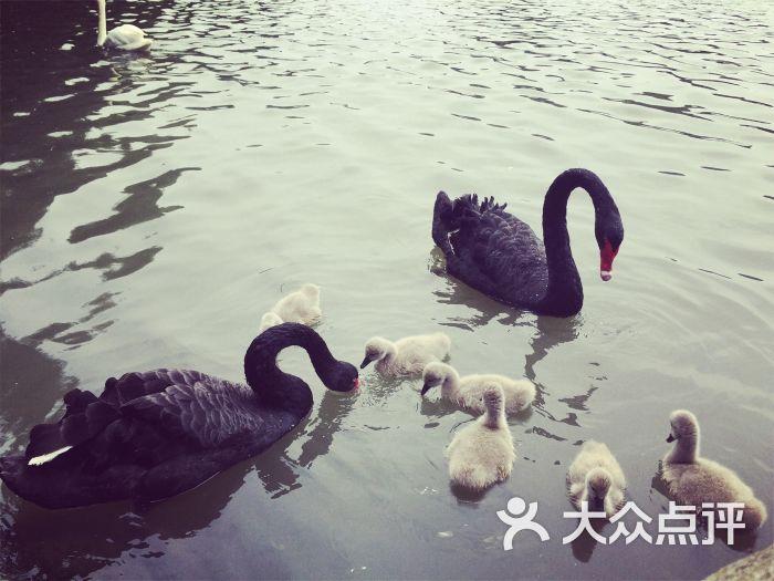 上海野生动物园-大眼龙猫的相册-上海景点-大众点评