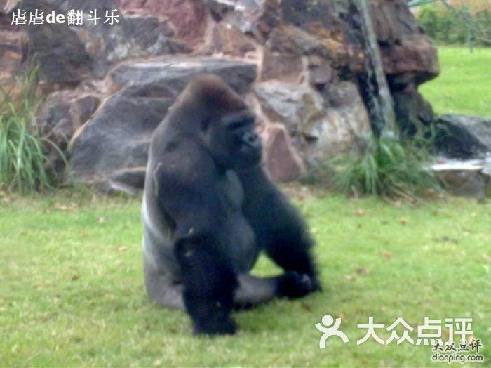 上海动物园猩猩图片-北京动物园-大众点评网
