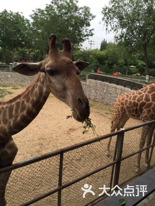 石家庄动物园图片 - 第6张