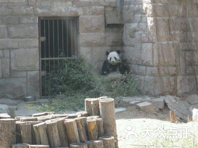 北京动物园图片 - 第5张