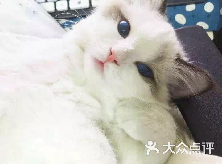 壁纸 动物 猫 猫咪 小猫 桌面 720_534