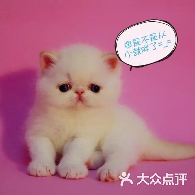 加菲猫苑-图片-北京宠物-大众点评网