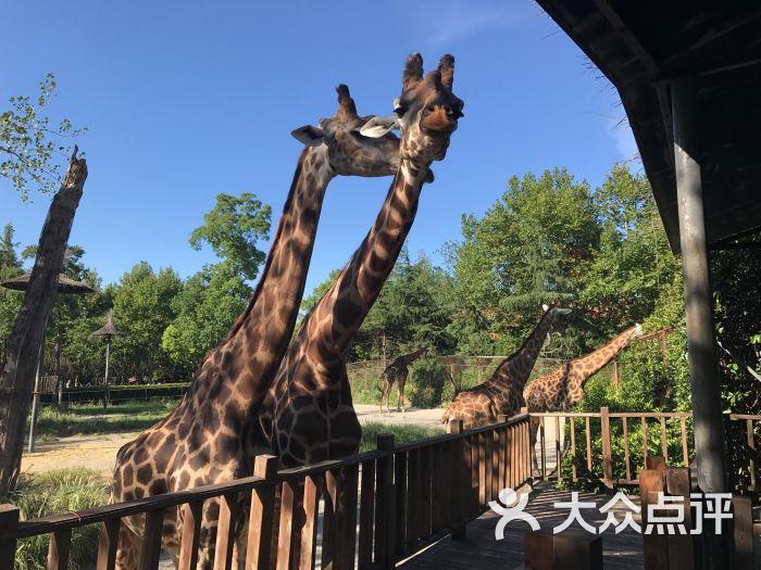 上海野生动物园图片 - 第10张