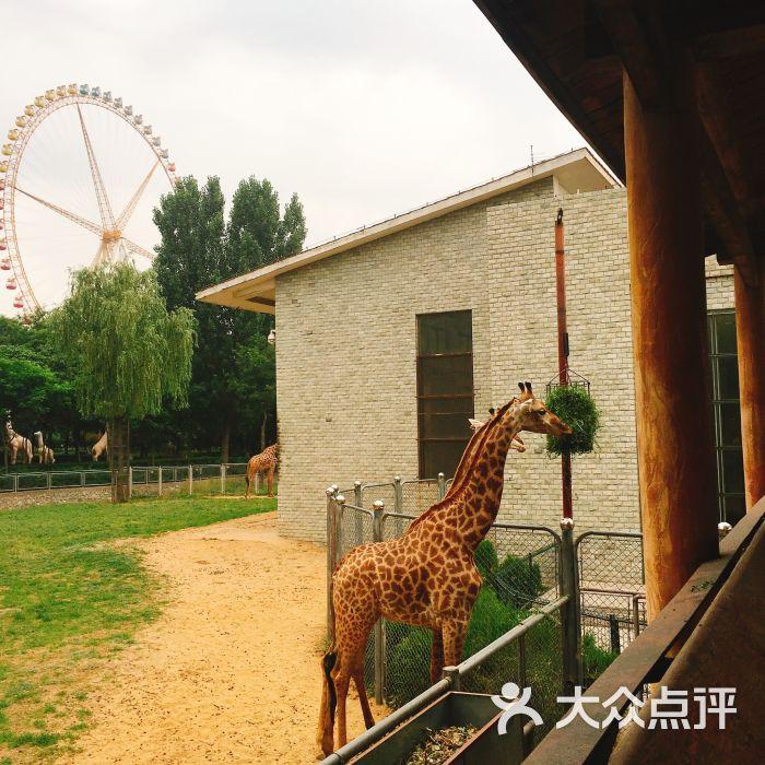 石家庄动物园图片 - 第8张