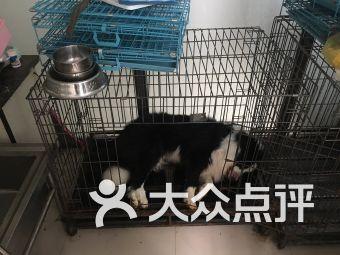 和和宠物诊所(水清路店)