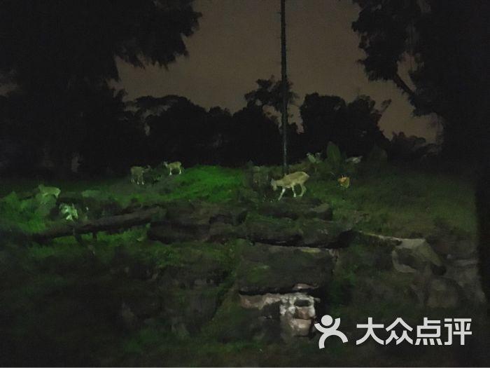 夜间野生动物园图片 - 第3张