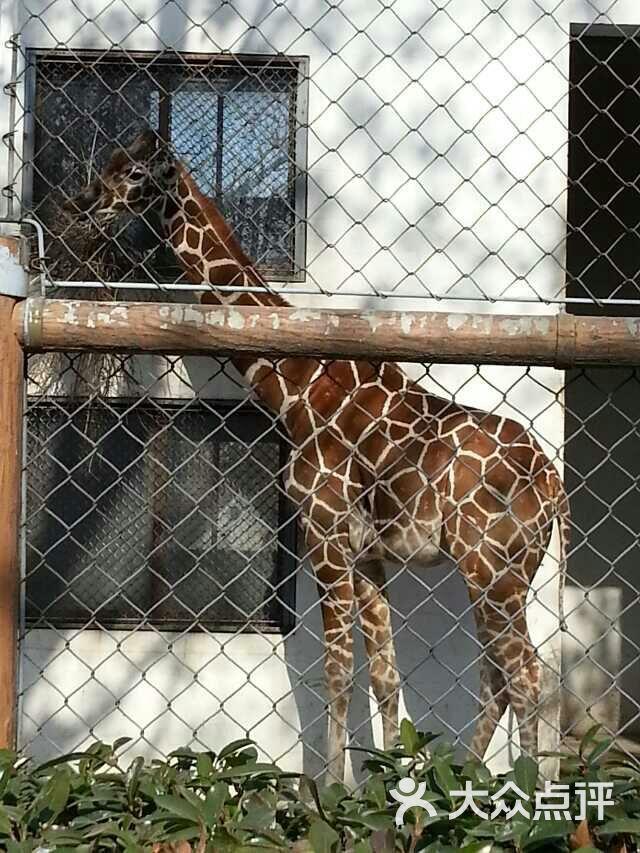 苏州动物园图片 - 第28张