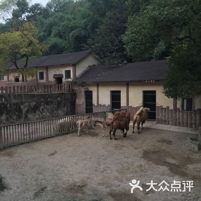 重庆动物园景点图片 - 第12张