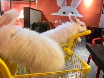 安哥拉巨兔体验馆