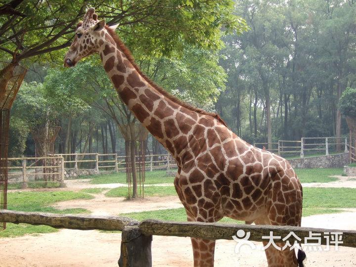 广州动物园的全部评价-广州-大众点评网