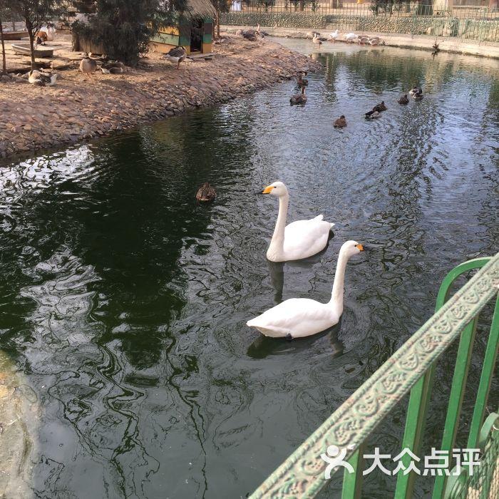 美神宫动物园图片 - 第4张