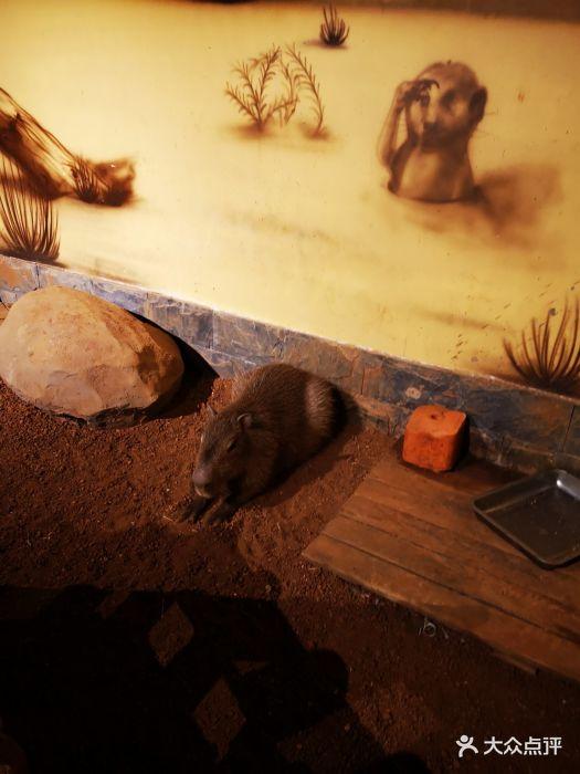 天津zoonly动物主题公园图片 - 第55张