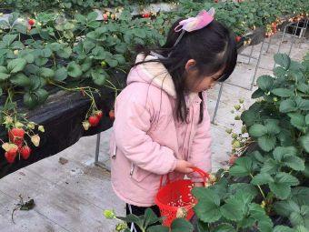 莓心居草莓采摘园