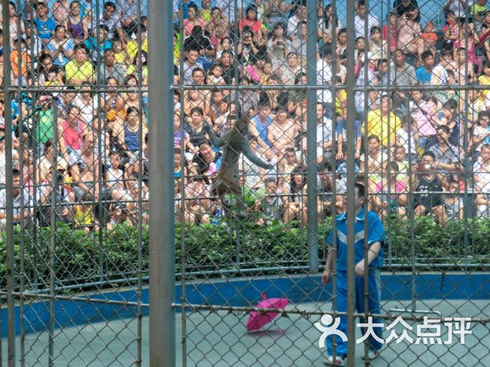 广州动物园-动物行为展示-环境-动物行为展示图片