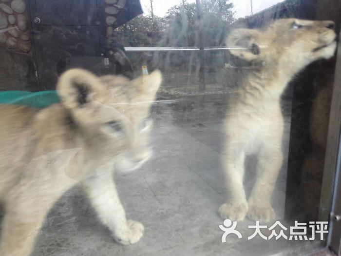 上海野生动物园-图片-上海周边游-大众点评网