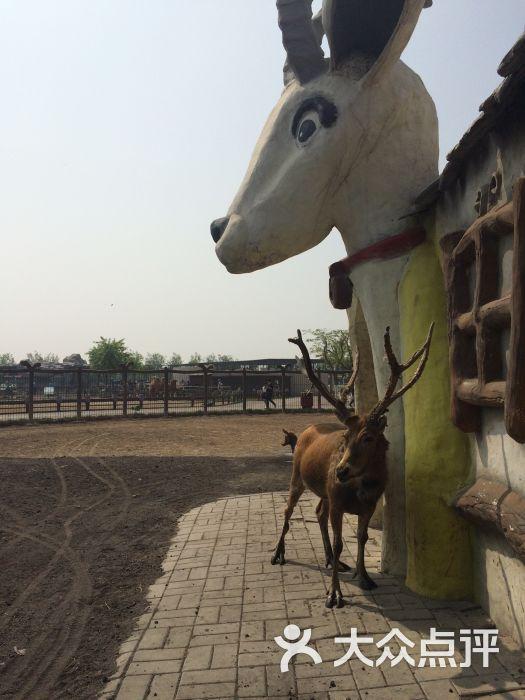 静海县 仁爱团泊湖 动植物园 光合谷动物园 所有点评  05-07 光合谷