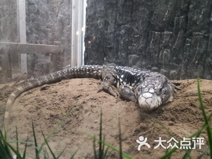 两栖爬行动物馆-图片-北京周边游-大众点评网