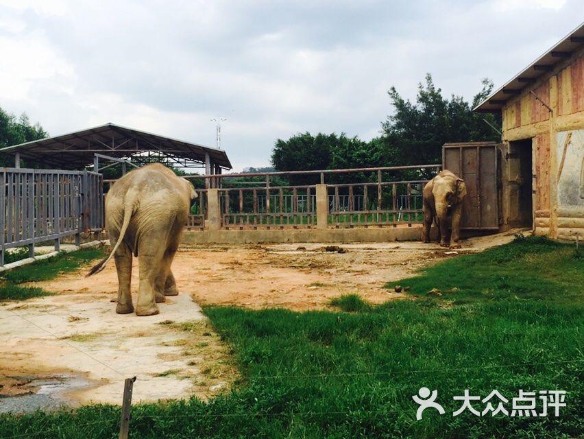 东莞寮步香市动物园图片 - 第4张