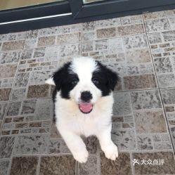 电话 地址 价格 营业时间 求水山度假区宠物医院团购 深圳宠物