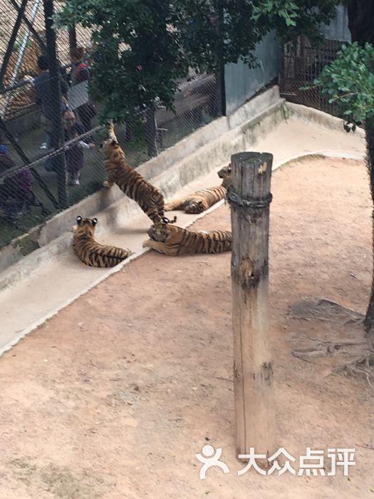 深圳野生动物园-图片-深圳景点-大众点评网