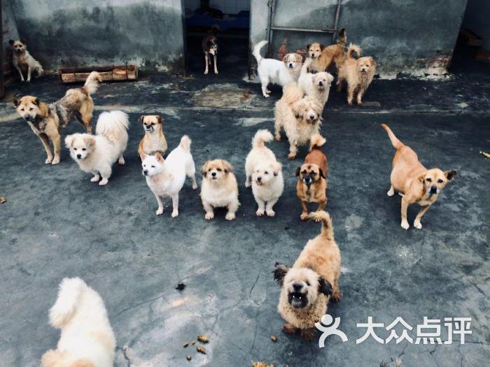 爱之家流浪动物救助中心图片 - 第18张