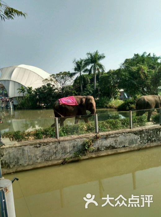 东莞寮步香市动物园图片 - 第3张