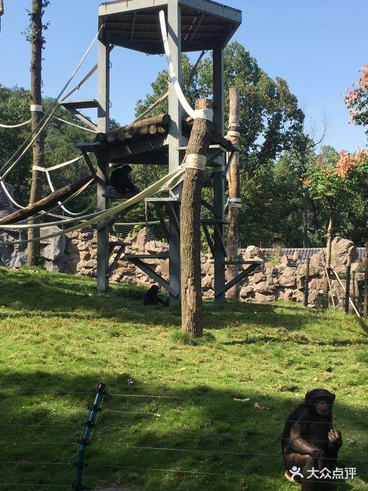 杭州动物园图片 - 第20张