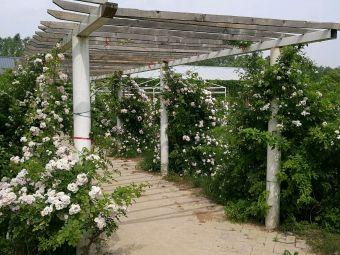 开封市玫瑰庄园
