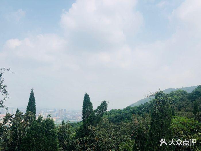 惠山国家森林公园图片 - 第5张