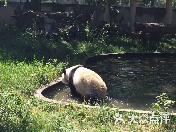 天津动物园-图片-天津周边游-大众点评网