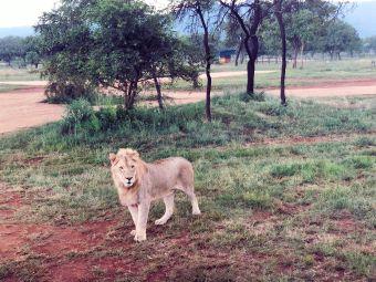 獅園 Lion park and safari park
