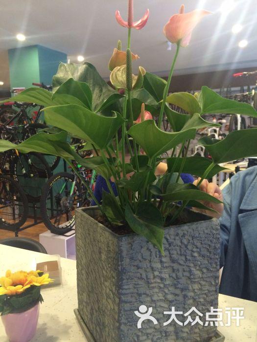 骑士的咖啡馆吧台植物图片 - 第37张