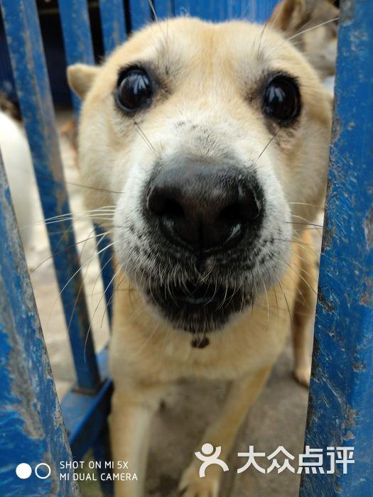 爱之家流浪动物救助中心图片 - 第32张