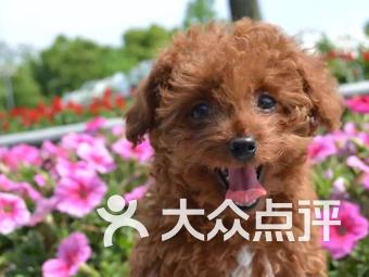 旺旺宠物社(前进店)