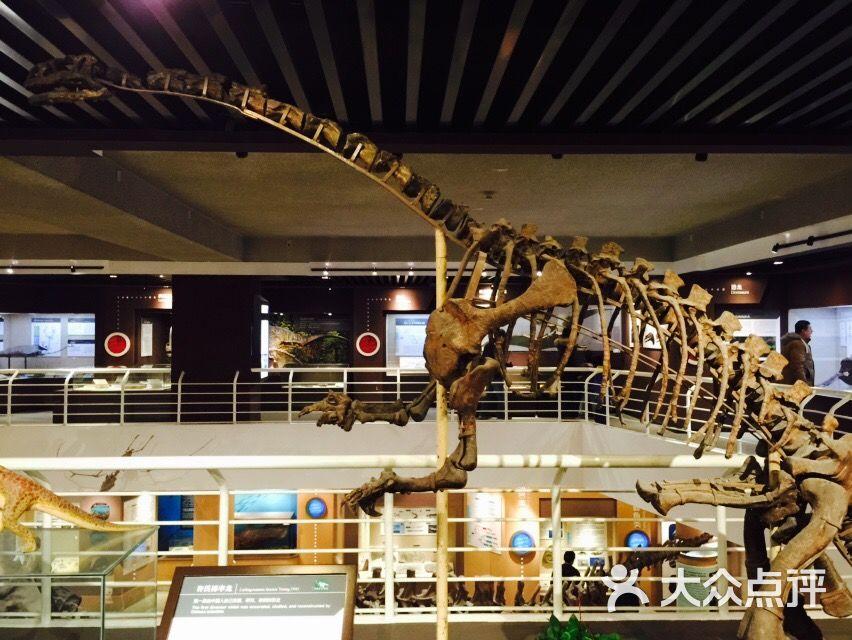 中国古动物馆图片 - 第1张