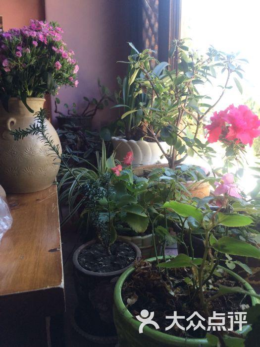 柿子树咖啡馆-图片-大理市美食-大众点评网