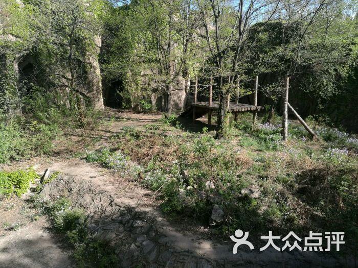 北京动物园狮虎山-图片-北京周边游-大众点评网