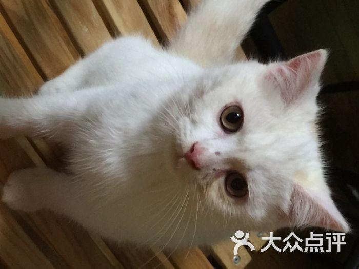 壁纸 动物 猫 猫咪 小猫 桌面 700_525