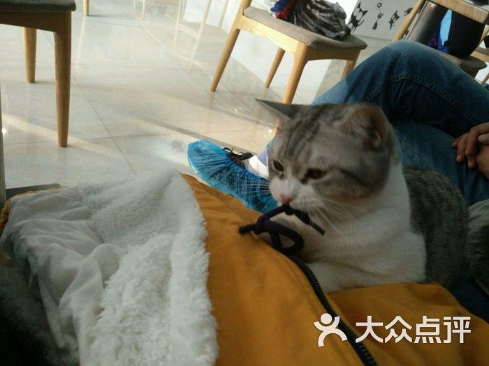 coffee地中海猫咪主题咖啡-图片-青岛