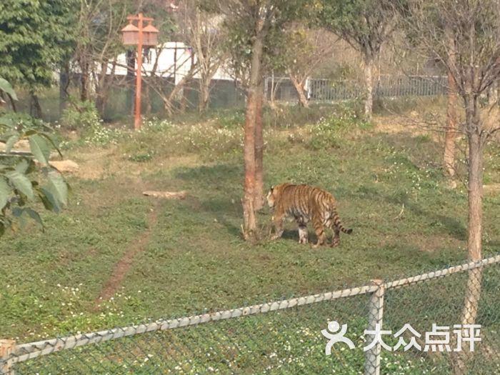 东莞寮步香市动物园香市动物园图片 - 第8张