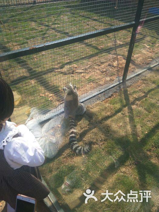 台州湾野生动物园的点评