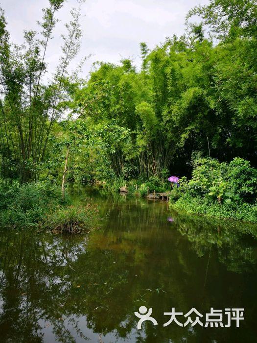 大屏嶂森林公园图片 - 第9张