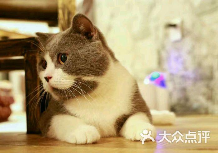 贝斯特宠物猫咪咖啡馆图片 - 第638张