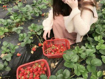 绿色草莓园