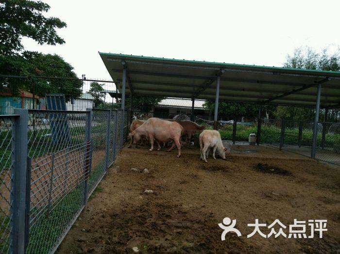 东莞寮步香市动物园图片 - 第79张
