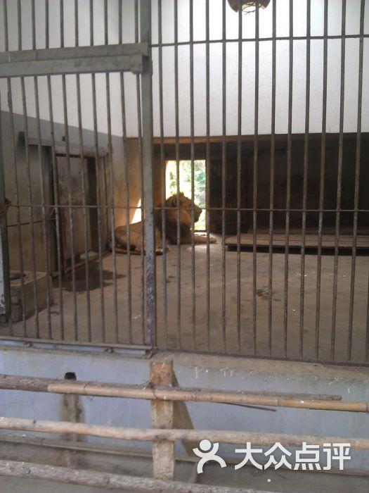 武汉动物园景点图片 - 第1431张