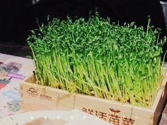 小三宝火锅(爱琴海购物公园店)的活体鲜豆苗